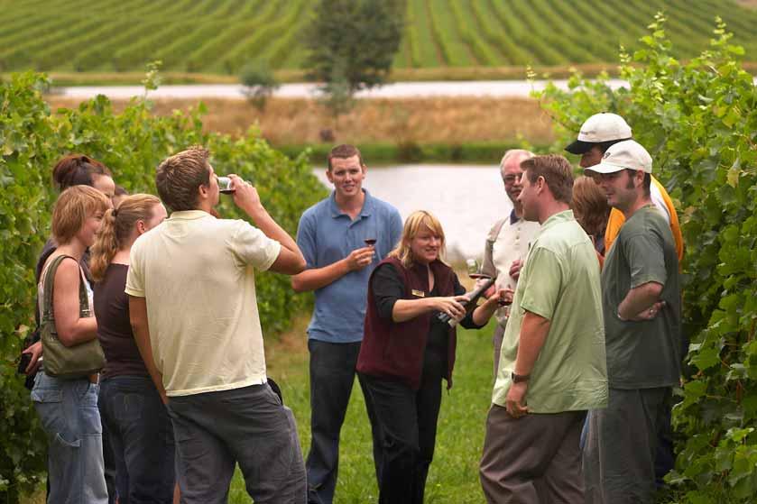 Visita Con Cata En Dos Bodegas De La Rioja Alavesa Incluye Visita A